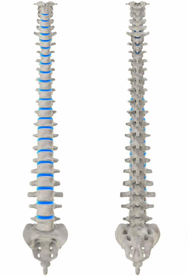 The Ideal Spinal Column Posturetek Subluxation Remodeling Systems